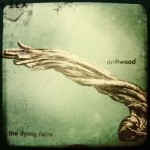 dyingfallsdriftwood